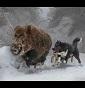 Karelian Del Vulture