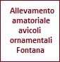 Allevamento amatoriale avicoli ornamentali Fontana