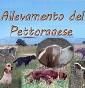 Pettoranese
