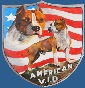 American V.I.D. kennel - Allevamento american-staffordshire