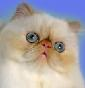 Anjelicats Cattery