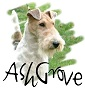 AshGrove Airedale e Wire Fox Terriers - Allevamento airedale-terrier
