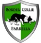 Border Collie Parrella - Allevamento border-collie