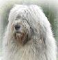 Allevamenti cani cane da pastore della russia meridionale for Cane da pastore della russia meridionale