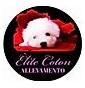Elite Coton