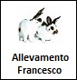 Francesco - Allevamento californiana