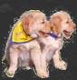 Glisten - Allevamento golden-retriever