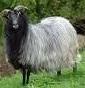 Nordik Sheep Farm di Massimiliano Damiani