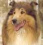 Jonicadog kennel