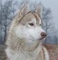 Keral'Ghin'S - Allevamento siberian-husky