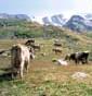 La Fiorida - Bio Natura Valtellina