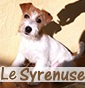 le syrenuse - Allevamento jack-russell-terrier