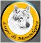 Lupo di Montelepre - Allevamento cane-lupo-cecoslovacco