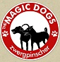 Magic Dogs - Allevamento zwergpinscher