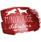 MINI ROUGE - Allevamento labrador-retriever