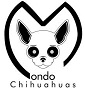 Anima Chihuahua - Allevamento chihuahua