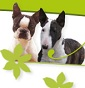 Nottinh Hill - Allevamento bull-terrier-miniature