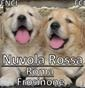 Nuvola Rossa - Allevamento golden-retriever