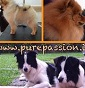 PurePassion - Allevamento border-collie