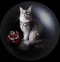 Red Crystal Rose's - Allevamento maine-coon