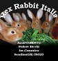 Rex rabbit italia