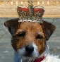save the queen kennel - Allevamento jack-russell-terrier