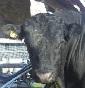 Soc. Agricola F.lli  Sassella SNC