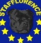 Stafflorence - Allevamento staffordshire-bull