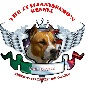 THE ITALIANISSIMO'S KENNEL - Allevamento american-staffordshire