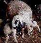 La filiera della lana