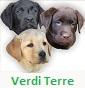 Verdi Terre Labrador's - Allevamento labrador-retriever