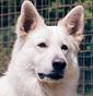 della Vittoria Alata - Allevamento cane-lupo-cecoslovacco