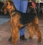 Woodypaul - Allevamento airedale-terrier